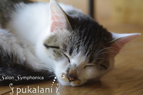 150306_cat_01