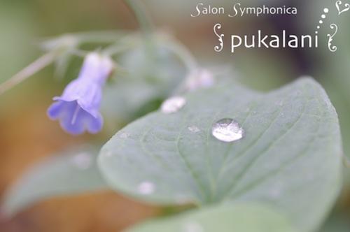 140105_smallflower_02