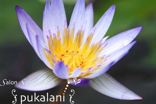 150618_lotus_01